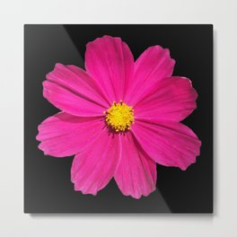 Pink and Yellow Cosmos Flower 1001 Metal Print