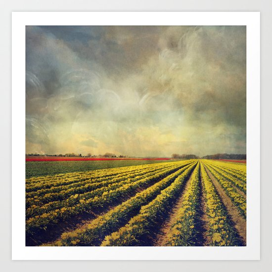 Chaos & Order - Field of Tulips Art Print