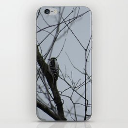 This beautiful little Downy Woodpecker iPhone Skin