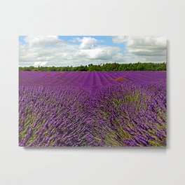 Lavender Landscape (Version 1)  Metal Print
