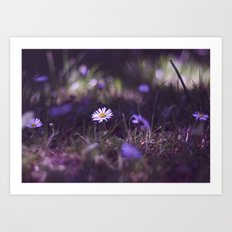 midnight daisy  Art Print