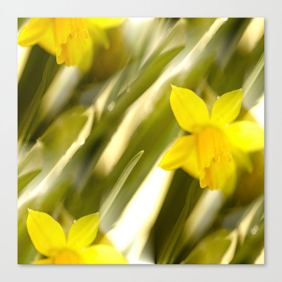 Spring atmosphere with yellow narcissus Canvas Print