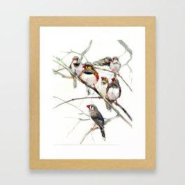 Birds, Cute birds Zebra Finch Art, Pet bird, Nursery, Children room Framed Art Print