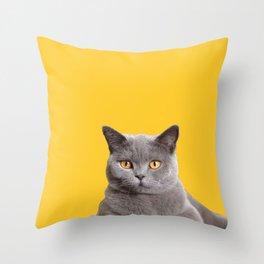 Grey British short hair cat Throw Pillow