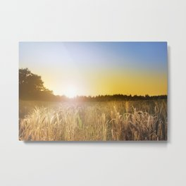 Sunset over Cornfield Metal Print