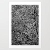 Snowy Branches #2 Art Print