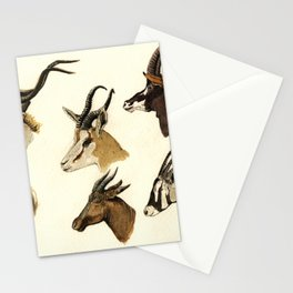 african antelopes Stationery Cards