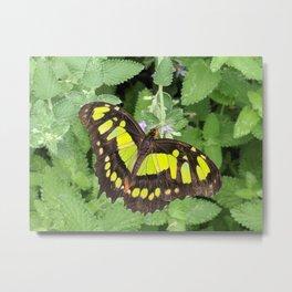 spring monarch Metal Print