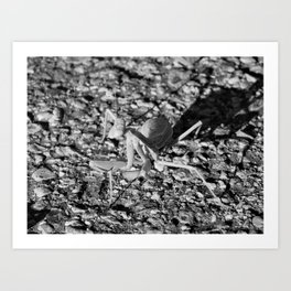 Monochrome Praying Mantis Art Print