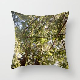 Redwood Ceiling  Throw Pillow