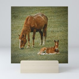 Horse And Foal Mini Art Print