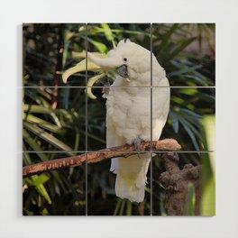 Sulfur-Crested Cockatoo Salutes the Photographer Wood Wall Art