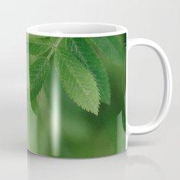 Spring life - Beautiful green rowan leaves in macro image Coffee Mug