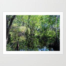 Swamp Song Art Print