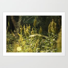 Mountain Meadows 01 Art Print