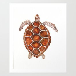 Turtle,Shell, Tortoise, Sealife, Lover, Animal Love, Brown Turtle, Wildlife, Turtle Lover, Turtles Art Print