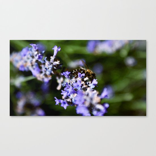 Bee on lavander Canvas Print