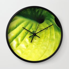 Katydid on Bright Green Hosta Wall Clock