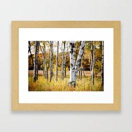 Birch Bottoms Framed Art Print