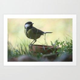 Great Tit Bird In The Garden Art Print