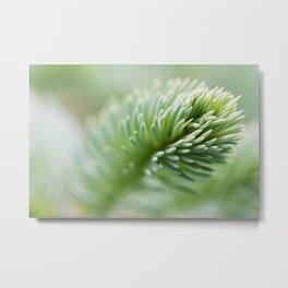 Blue Spruce Needles 30 Metal Print
