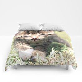 Katze, Cat Comforters