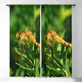 Dragonfly Blackout Curtain