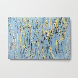 Horsetail and blue water Metal Print