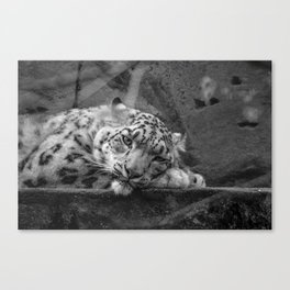 """'Relax, i'm Rare and Beautiful"""" Canvas Print"""