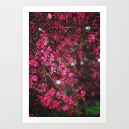 Spring in Bloom Art Print