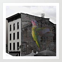 Urban Hummingbird Art Print