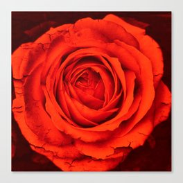 Vintage Rose,red Canvas Print