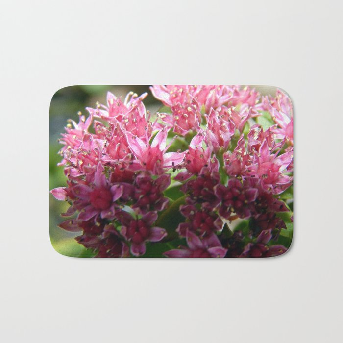 Sedum Flowers and the Ant Bath Mat
