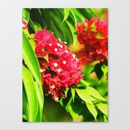 Floral collection Canvas Print