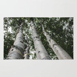 Birch Tree Forest By Magda Opoka Rug