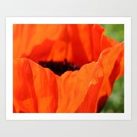 Up Close with the Poppy Art Print