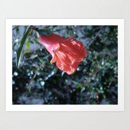 Flowers #15 Art Print