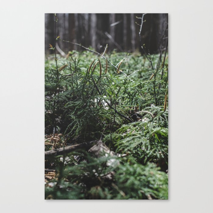 Softly lit ferns Canvas Print
