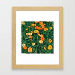 Marigolds by Koloman Moser, 1909 Framed Art Print