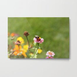 Busy Summer Bee Metal Print