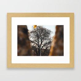 Tree through a tree Framed Art Print