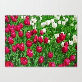 Vibrant Red And White Floral - Tulip Festival Canvas Print