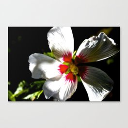 Another Flower Canvas Print