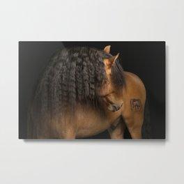 Horse Fine Art Metal Print