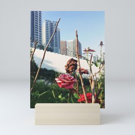 Black heart red heart (Roses at Gimpo, Seoul, South Korea) Mini Art Print
