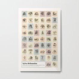Jacob George Strutt - Sylva Britannica Tree Chart of Britain Metal Print