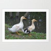 ducks Art Prints featuring Ducks by Stephanie Owens