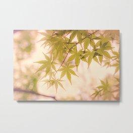 Green leaves of Japanese maple - vintage styleⅡ Metal Print