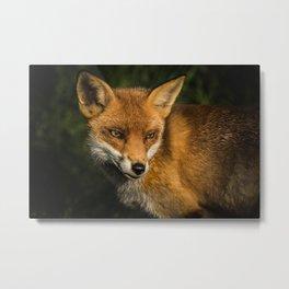 Fantastic Mr Fox Metal Print