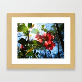 Passion of The Sun Framed Art Print